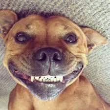 Dog Smiling Meme - smiling dog blank template imgflip