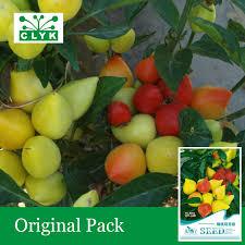 20pcs bag indoor house plants seeds ornamental pepper