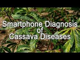 Plant Disease Diagnosis - new mobile app diagnoses crop diseases in the field and alerts
