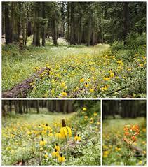 yosemite national park photography my husband brings me flowers