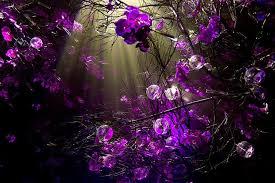 purple desktop wallpaper wallpapersafari
