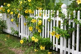 White Backyard Fence - 26 white picket fence ideas and designs