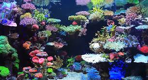 Live Rock Aquascaping Video Real Reef Aquascaping With Youngil Moon