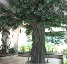artificial decorative trees for the home indoor decorative trees for the home home design and idea