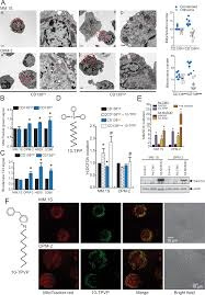 plos one mitochondrial targeted decyl triphenylphosphonium