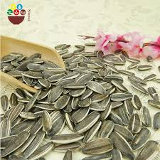 black sunflower seeds for oil black sunflower seeds for oil