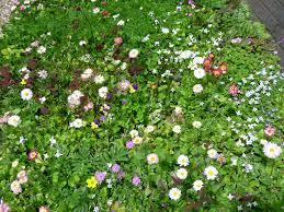 june 2013 grass free u0026 full of flowers