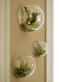 best 25 succulents in glass ideas on pinterest succulent