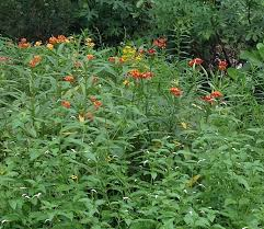 non native plants bound by beauty u2013 page 2 u2013 connect u2022 educate u2022 transform u2022 replicate