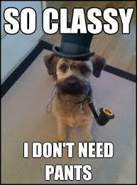 Classy Meme - funny pictures of dogs smile today pinterest funny pictures
