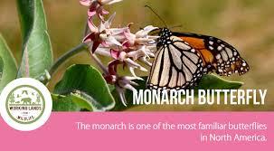 monarch butterflies nrcs
