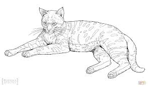 black footed cat coloring page free printable coloring pages