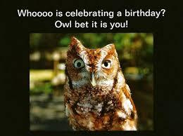 Owl Birthday Meme - 553 best birthdays are a hoot images on pinterest birthday