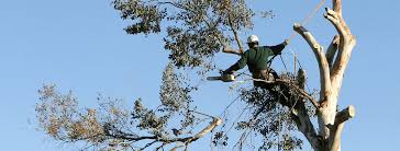 tree trimming silver tree service