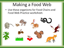 food chains u0026 webs introduction to energy flow ppt video online