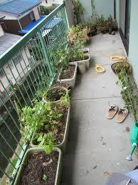 square foot gardening forum gardenabc com