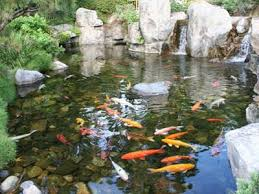 Pictures Of Backyard Ponds by 4 Tips For Creating A Breathtaking Backyard Pond