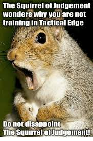 Disappoint Meme - the squirrel of judgement wonders why you are not training in