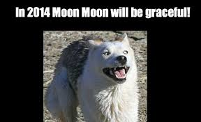 Moon Moon Memes - in 2014 moon moon will be graceful weknowmemes