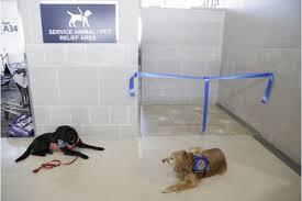 bagno per cani all aeroporto di detroit il bagno per cani foto