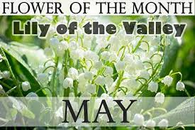 flowers of the month may s birth flowers holidaysmart