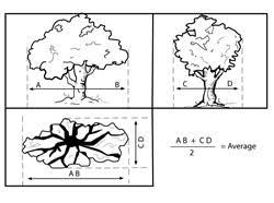 illinois forestry illinois big tree register