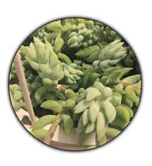 10 succulents for low light environments u2013 green obsessions