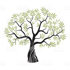 vector olive tree stock vector art 479009464 istock