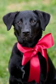 best 25 puppy photo ideas ideas on pinterest dog photos dog