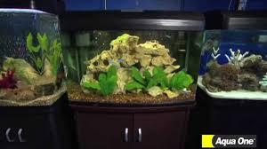 talking fish different types of aquarium choices aqua one youtube