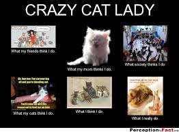 Funny Cat Lady Memes - crazy cat lady what people think i do what i really do