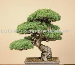 alibaba seller channel japan japanese tree