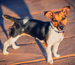 the 10 most badass dog breeds