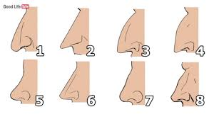 shape your nose tells a ton about your personality see