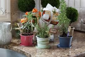 diy herb garden spring craft temp tee potted kitchen herb garden joy of kosher