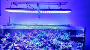 led reef aquarium lighting best reef aquarium lighting reef tank led calculator aokpharm info