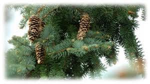 trees saskatchewan sleigh and wagon rides