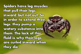 Cute Spider Meme - facts about spiders give me the heebie jeebies thechive