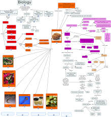 Photosynthesis Concept Map Phylum Porifera