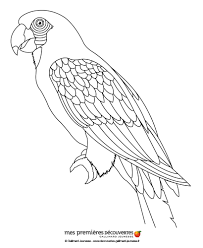 parrot coloring pages hellokids com