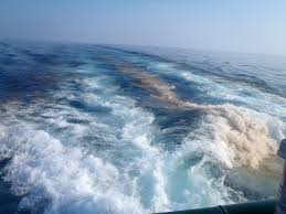 science and technology gulf of mexico oil spill u0027s effects on deep