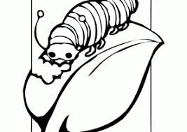 caterpillar coloring pages coloring4free