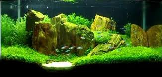 Aquascape Canada Aquarium Plants Canada Live Aquatic Plants For Fish Tanks