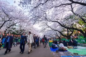 ueno cherry blossom festival tokyo cheapo