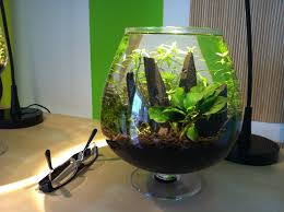 Japanese Aquascape by 3 Liter Nano Tank Aquascaping Aquascaping Pinterest