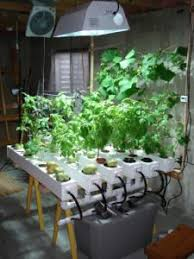 new garden trellis ideas 10 of the best concept garden gallery
