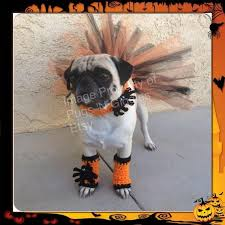 Dog Costume Halloween 1025 Halloween Dog Costumes Cat Images Food