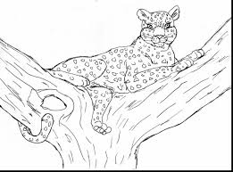 awesome cheetah coloring pages with cheetah coloring page