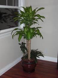 indoor plants with names
