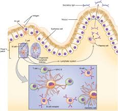 the immune response against pathogens anatomy and physiology ii
